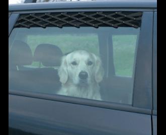 Lüftungsgitter fürs Auto für Hunde TRIXIE, schwarz