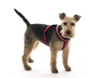 Comfy Harness Hundegeschirr