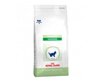 Royal Canin Pediatric weaning Trockenfutter für Kätzchen