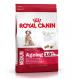 Royal Canin Medium Ageing 10+ 15kg für Hunde älter als 10 Jahre