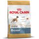 Royal canin Boxer junior Trockenfutter für junge Boxer