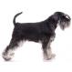 Royal canin Schnauzer Trockenfutter für Schnauzer