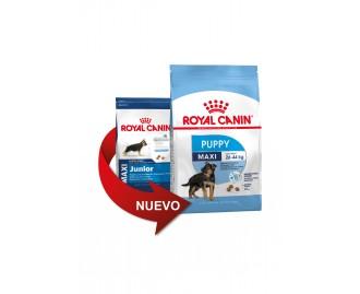 Royal Canin Maxi Junior Kroketten für Hunde