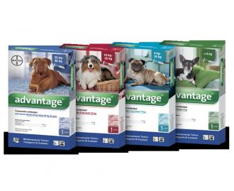 Advantage Pipetten gegen Ungeziefer für Hunde [4 Formate]