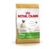 Royal canin carlino junior Trockenfutter für junge Carlino Hunde