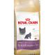 Royal canin british shorthair Trockenfutter für Katzen