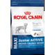 Royal Canin maxi junior active Trockenfutter für Hunde grosser Rassen